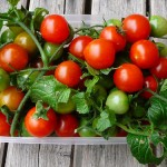 When to Plant Cherry Tomatoes